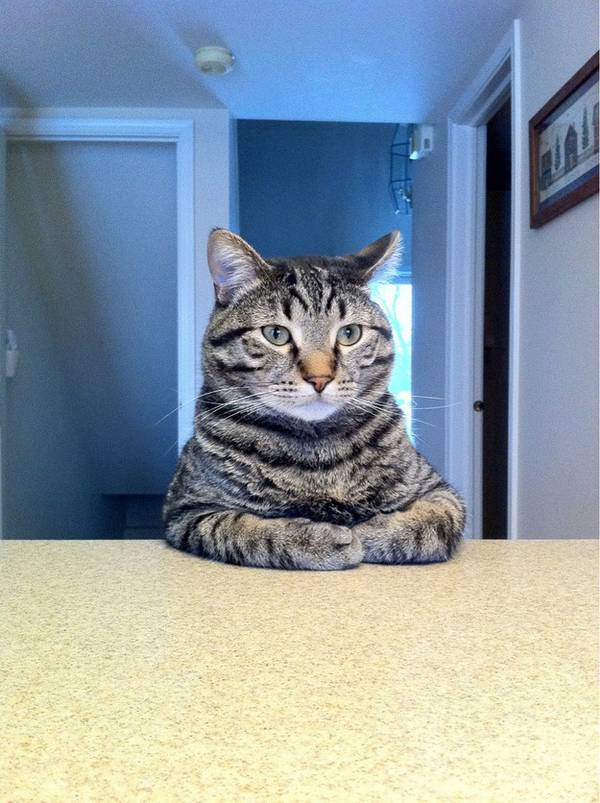 chien-chat-a-table (10)