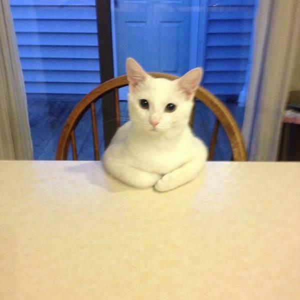 http://www.awwsomestuff.com/cutest-internet-cats-of-june/