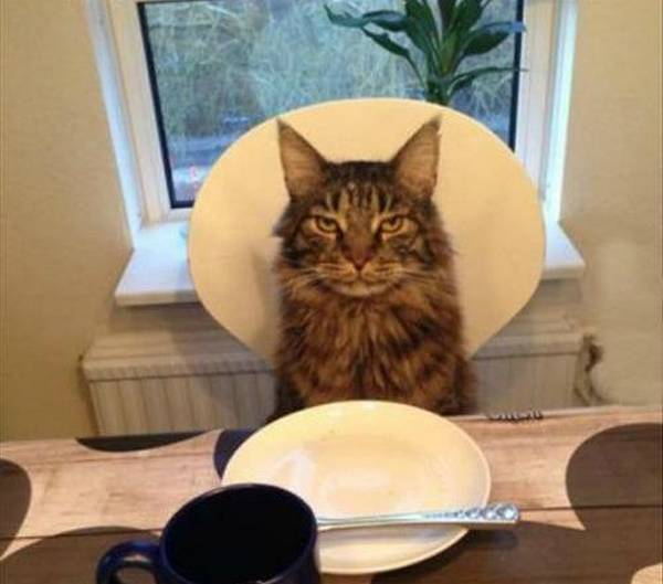 chien-chat-a-table (25)