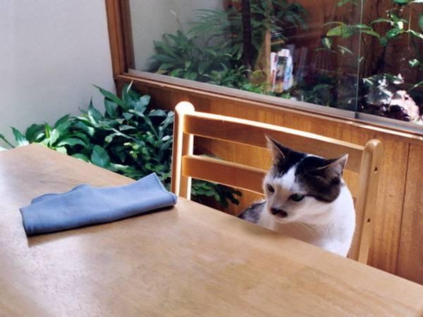 http://tomecat.com/madtimes/archive/cat_cat_blogging.html