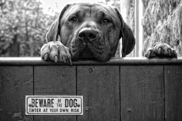 https://500px.com/photo/818076/beware-by-hot-dog-photography