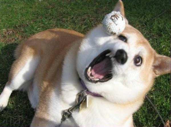 chien-nul-au-jeu (2)