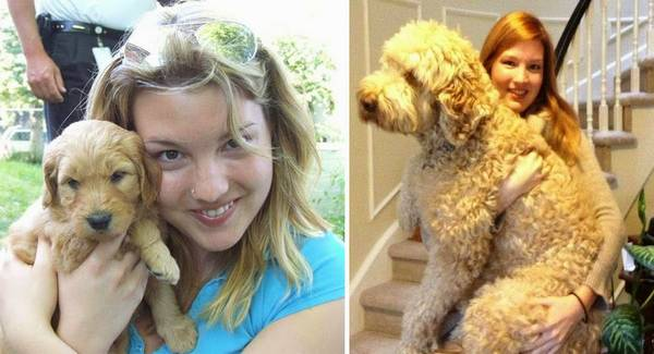 http://allucareabout.com/english/general/photos-of-dogs-after-growing-up/