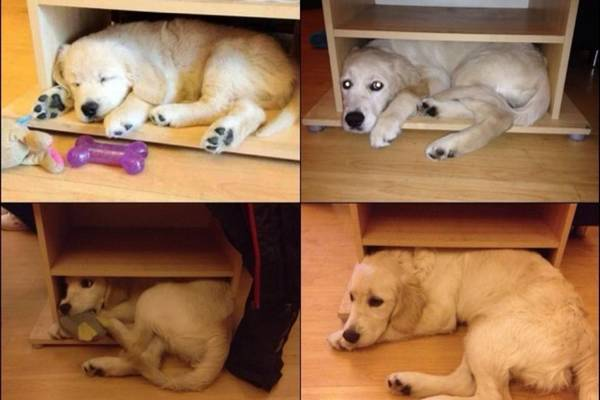http://www.awesomelycute.com/2014/09/from-puppies-to-adult-dogs-before-and-after-pictures-of-dogs-growing-up/