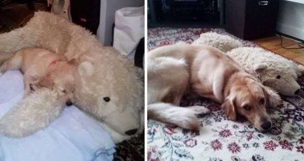 http://www.socialpaws.com/cats-and-dogs-growing-up-with-their-favorite-toys/