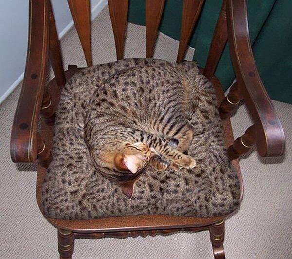 Camouflage-animal (15)