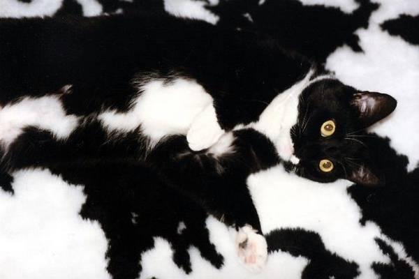 Camouflage-animal (28)