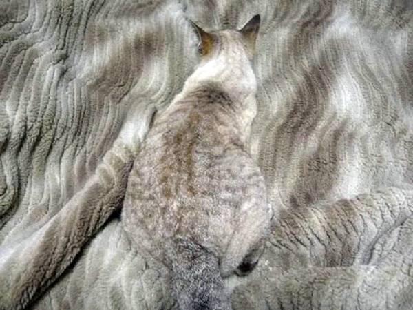 Camouflage-animal (6)