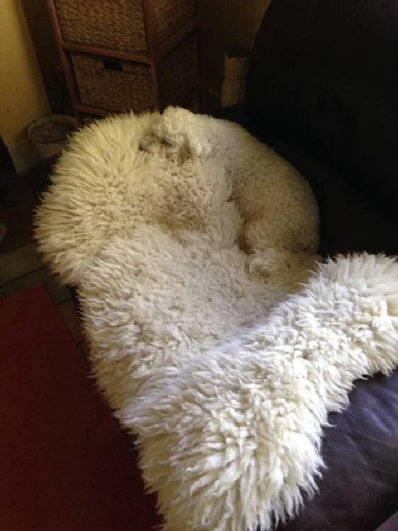 Camouflage-animal (9)