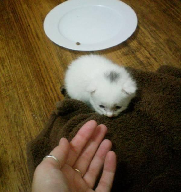 Kitty (7)
