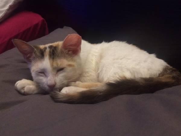 Lulu (10)