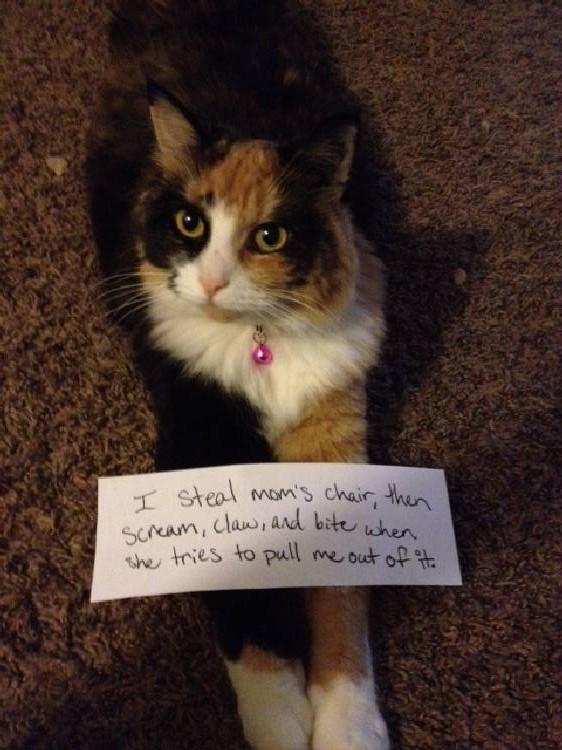 Shame-your-pet (11)