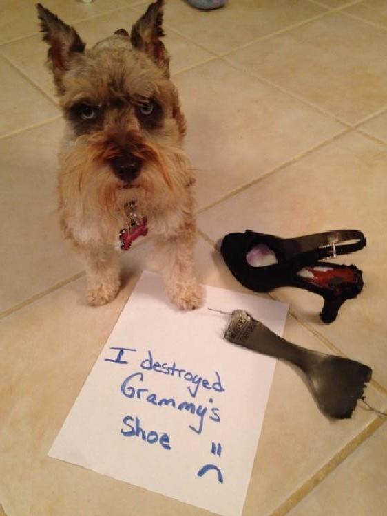 Shame-your-pet (16)