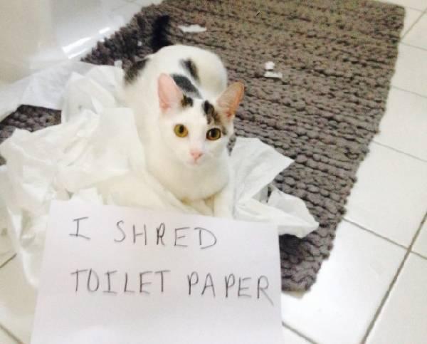 Shame-your-pet (18)