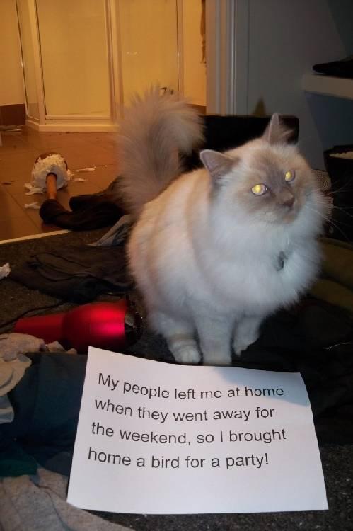 Shame-your-pet (2)