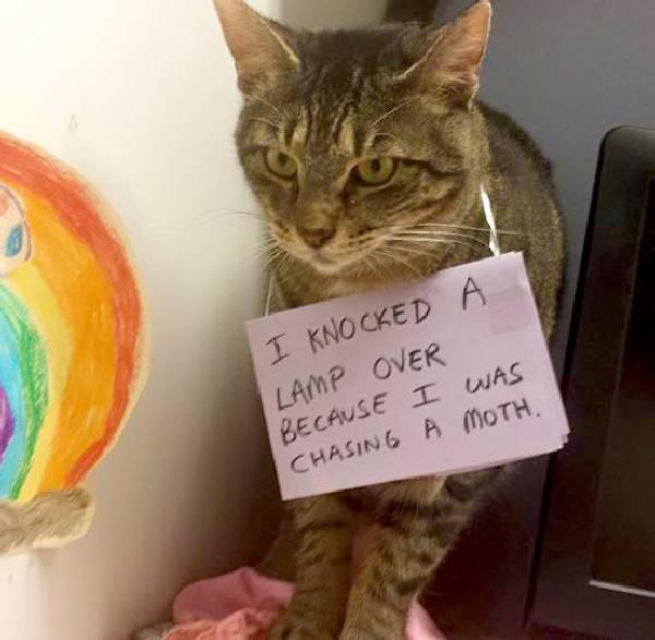 Shame-your-pet (32)