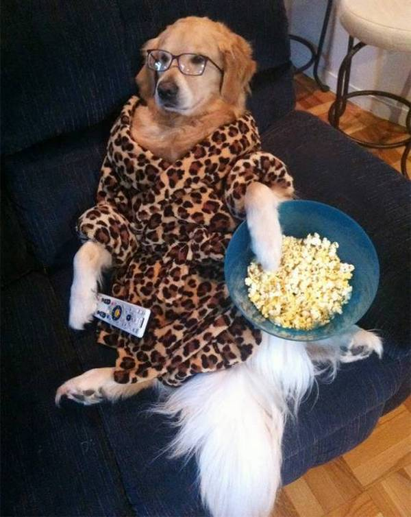 http://www.parhlo.com/this-dog-confused-of-being-a-human/