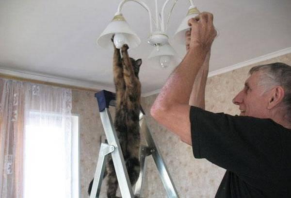 http://upshout.com/22-animals-doing-human-things/