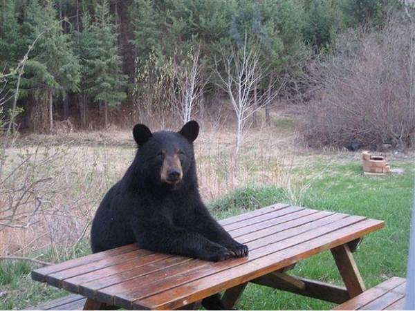 http://boredboard.com/bears-doing-human-things/