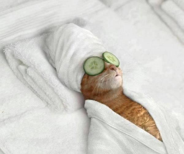 http://www.boredpanda.com/funny-animals-doing-human-things/