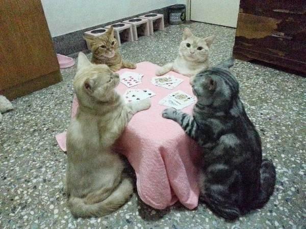 www.catdumb.com/20-funny-animal/
