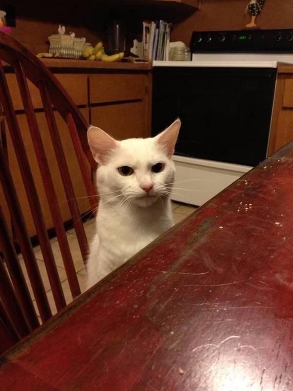http://ilovefunnyanimal.blogspot.fr/2013/03/sharing-funny-cats-part-40-30-pics-10.html
