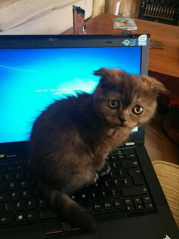 http://hypeangel.com/p/Mdkjo/happy-caturday