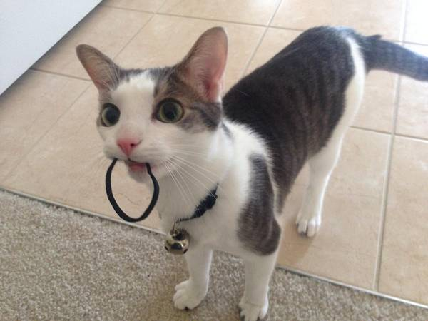 http://cuteanimals.me/p/13k3/mom-you-forgot-your-hair-tie
