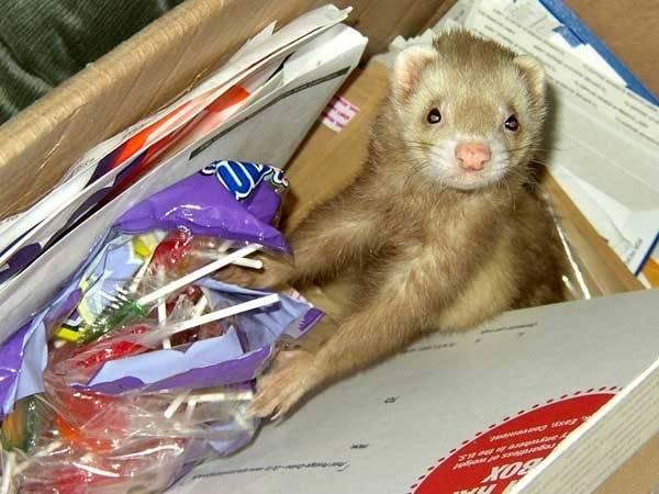 http://www.prikol.ru/wp-content/gallery/november-2010/pets-alone-06.jpg