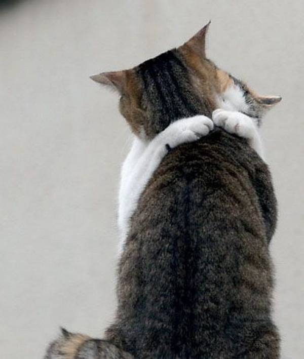 http://scout.cheatsheet.me/adorable-pics-cats-hugging-squee-guaranteed/