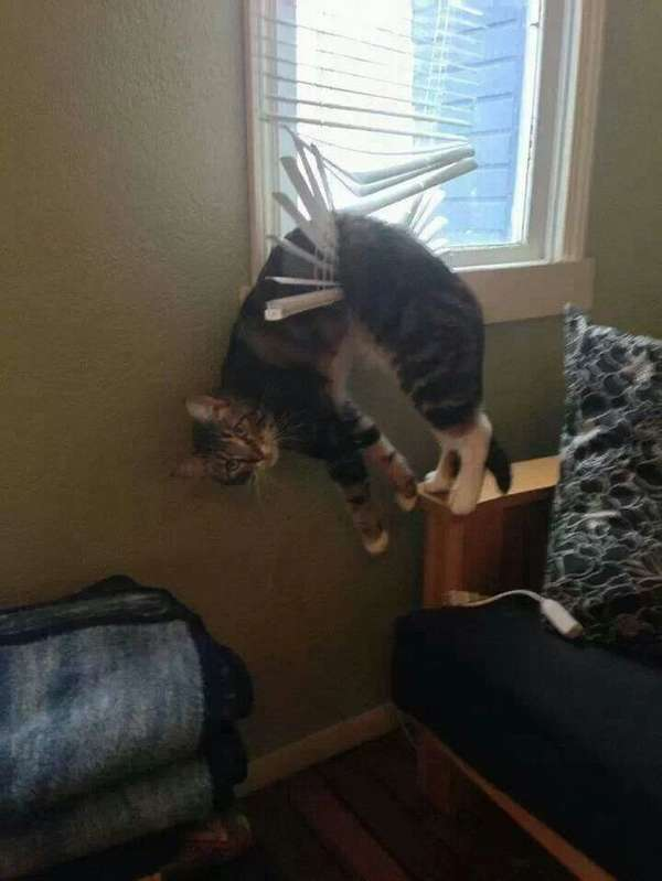 chat-pas-malin (1)