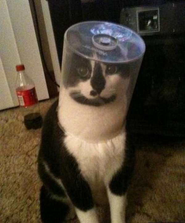chat-pas-malin (2)