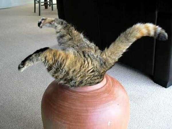 chat-pas-malin (4)