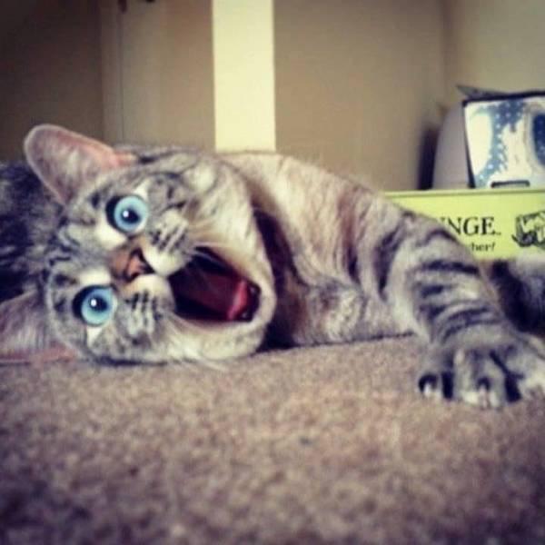 http://cdn.cutestpaw.com/wp-content/uploads/2013/12/Most-Famous-Felines-025.jpg
