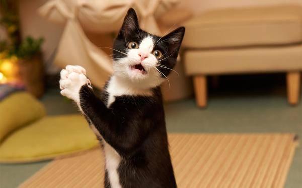 http://www.magic4walls.com/wallpaper/amazed-cat-surprised-kitty-funny-humor-struck-cat-surprise-kitten-funny-humor-19018.html