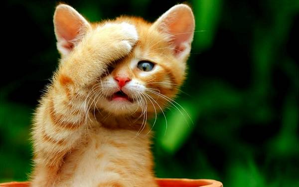 http://www.sillyhub.com/wp-content/uploads/2013/08/cute-cat-hd-wallpaper.jpg