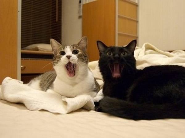 http://www.gadoo.com.br/entretenimento/30-fotos-divertidas-de-gatos-que-nao-conseguem-esconder-o-que-estao-sentindo/