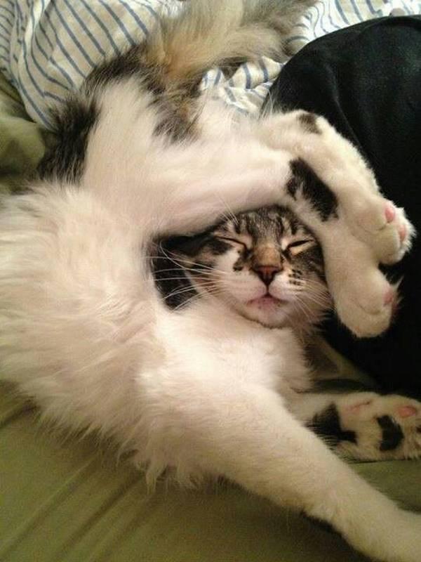 http://welovecatsandkittens.com/cat-pictures/15-cats-forgot-how-to-cat/