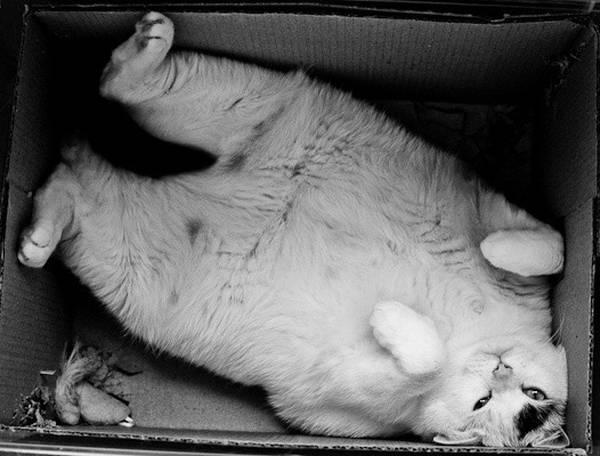 http://catseatyourface.tumblr.com/