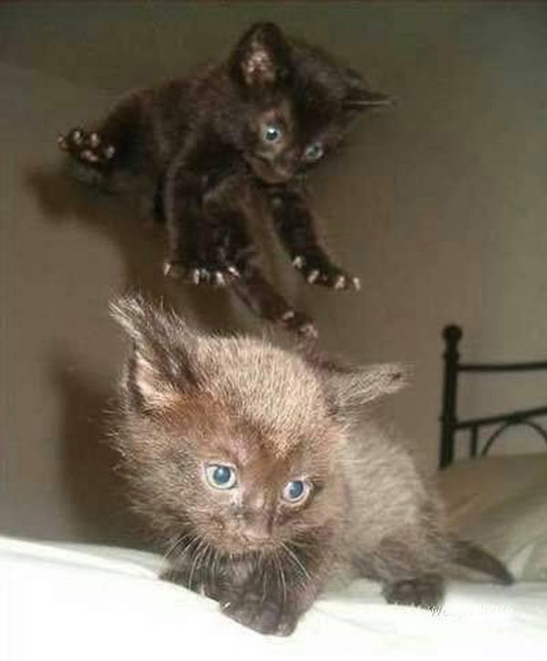 http://tonsofcats.com/jump-attack-ninja-kitten/
