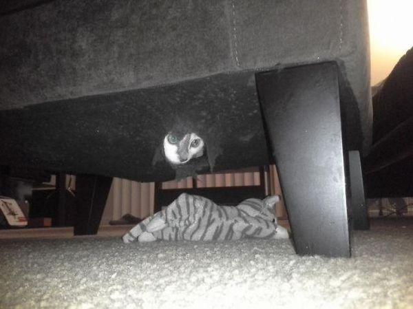 http://www.boredpanda.com/sneaky-ninja-cats/