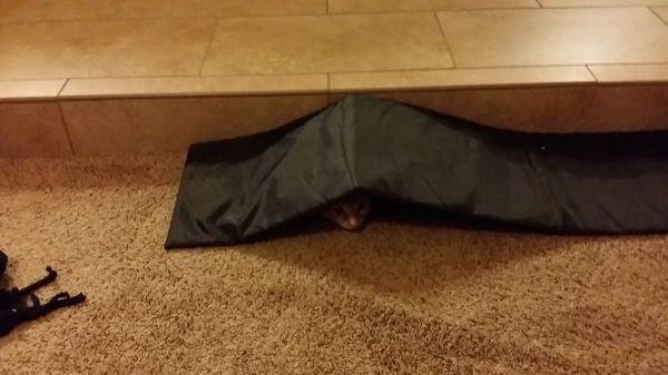 www.boredpanda.com/sneaky-ninja-cats/