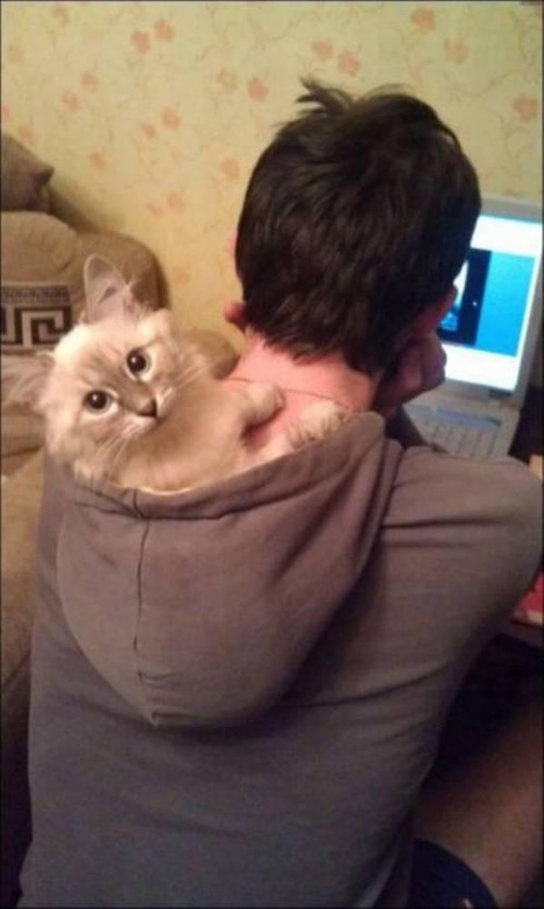 http://applepins.com/wp-content/uploads/2012/03/hoodcat.jpeg