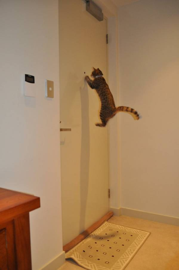 http://1funny.com/wp-content/uploads/2010/07/hover-cat.jpg