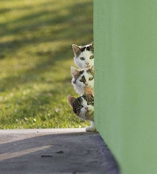 http://fun-gallery.com/funny-pics/animals/curious-cats-4050/
