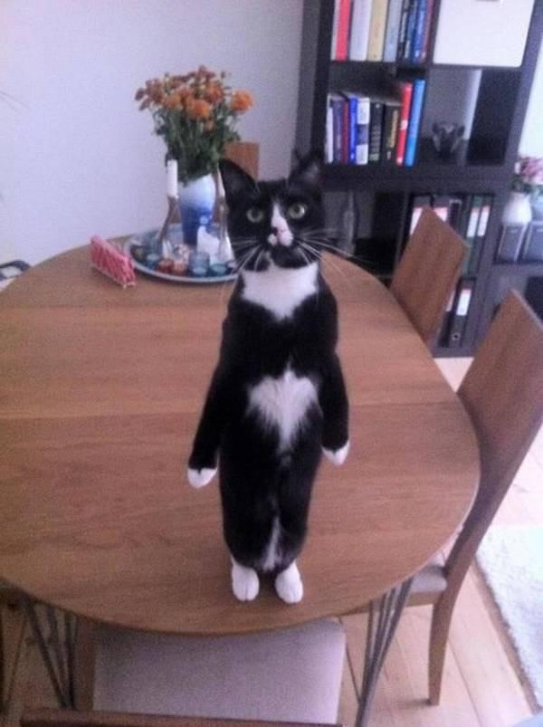 http://ilovefunnyanimal.blogspot.fr/2012/09/animal-fun-funny-cats-part-17-41-pics.html