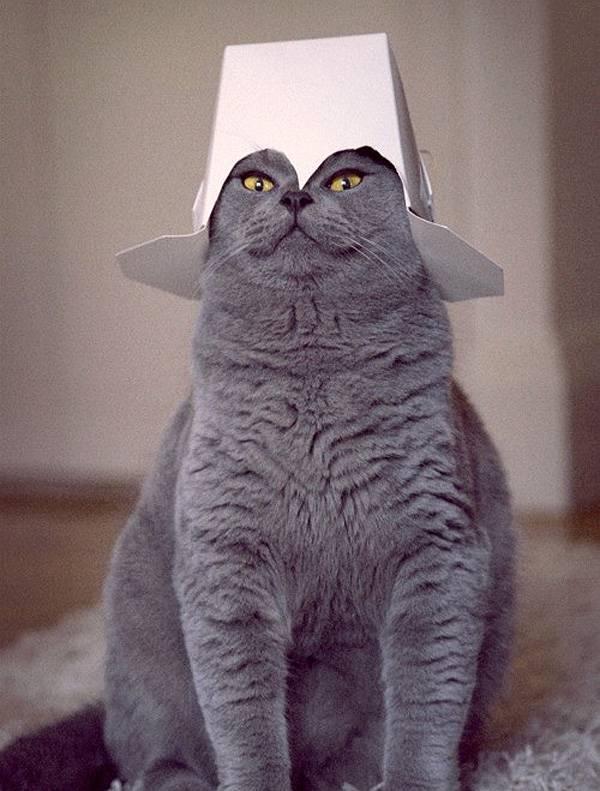 chats-etranges (15)