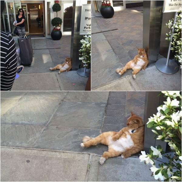 chats-etranges (16)