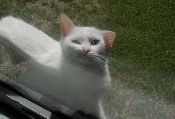 http://cl.jroo.me/z3/Z/5/z/d/a.aaa-Funny-cat-face.jpg