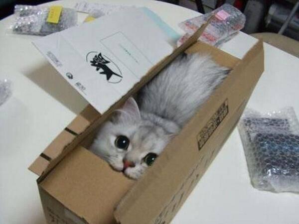 chats-etranges (8)